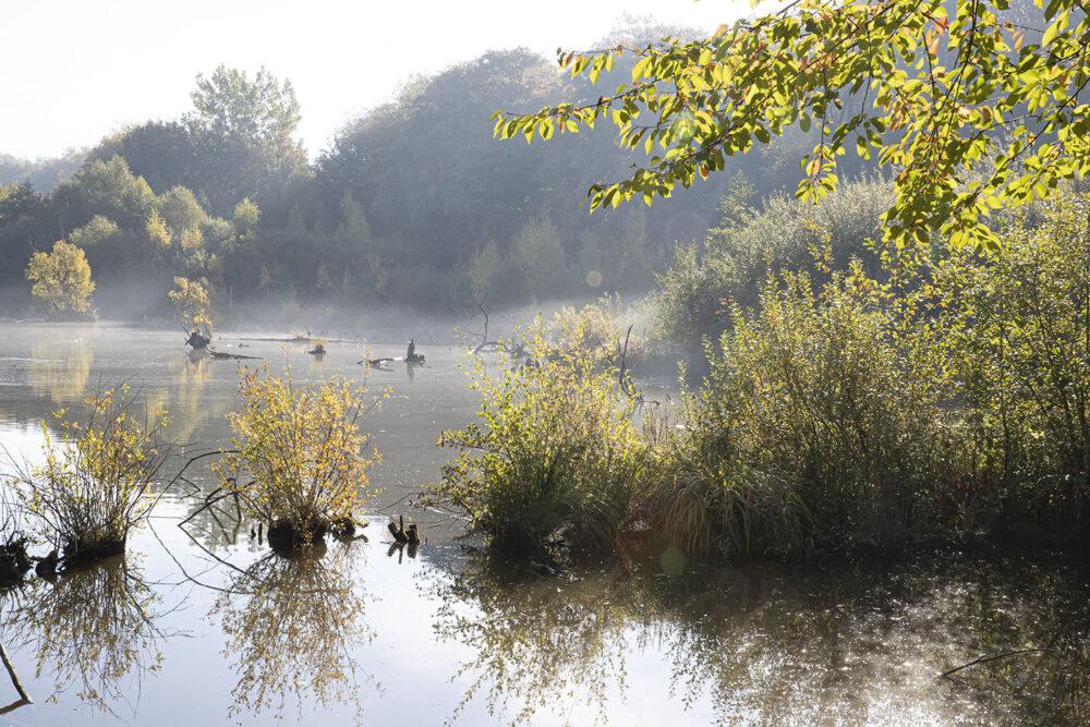 réserve de la Buissière