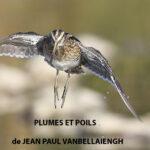 lien vers plumes-et-poils.be