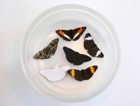 faux papillons