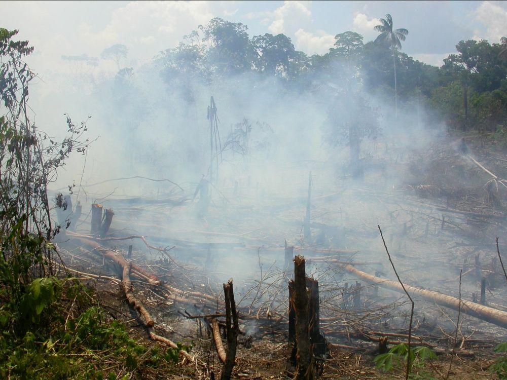 déforestation en cours sous les tropiques