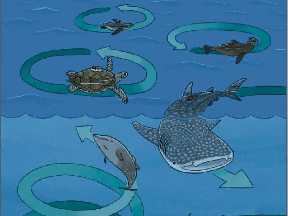 nager en cercle