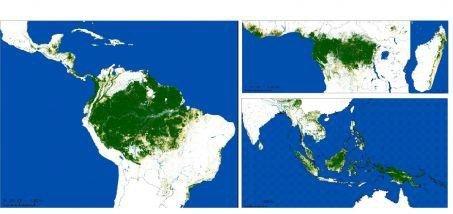 surface occupée par la forêt tropicale