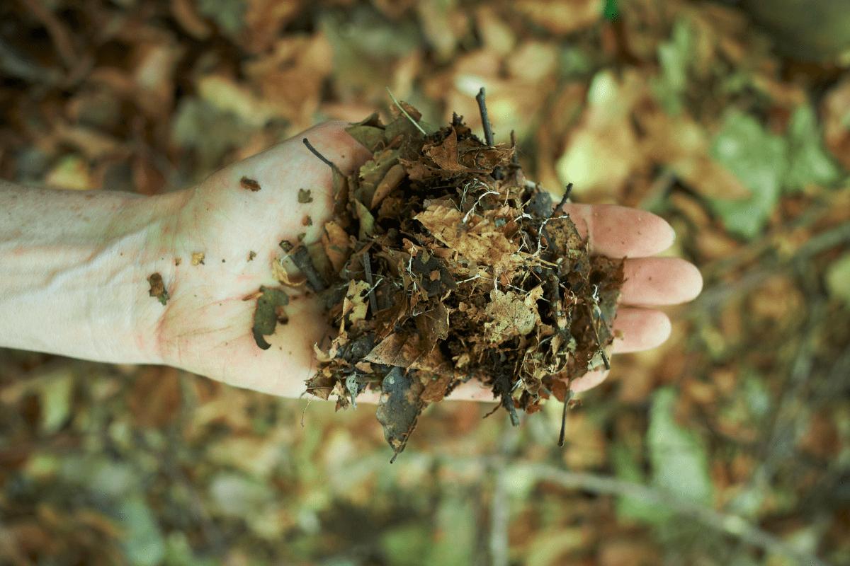 filaments de champignons