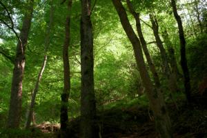 forêt d'orlu