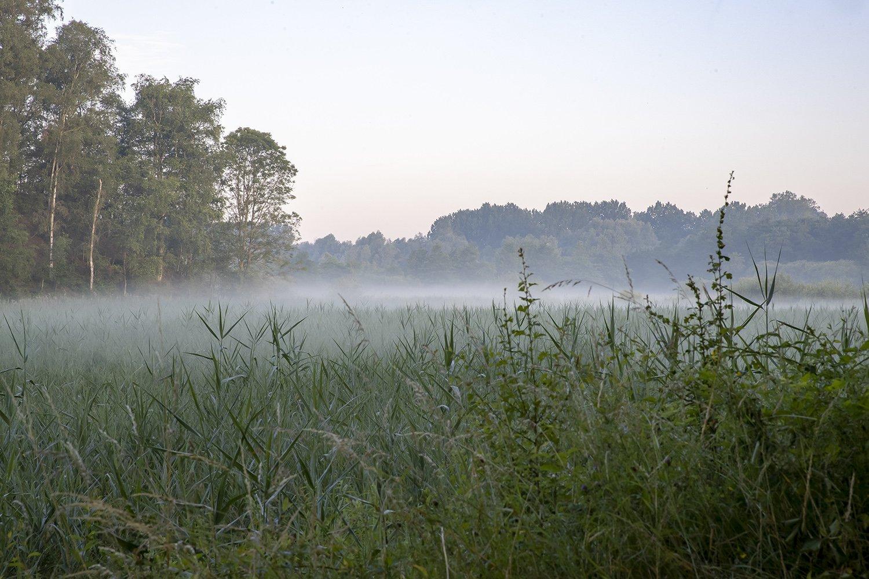 Site de chabeau Latour