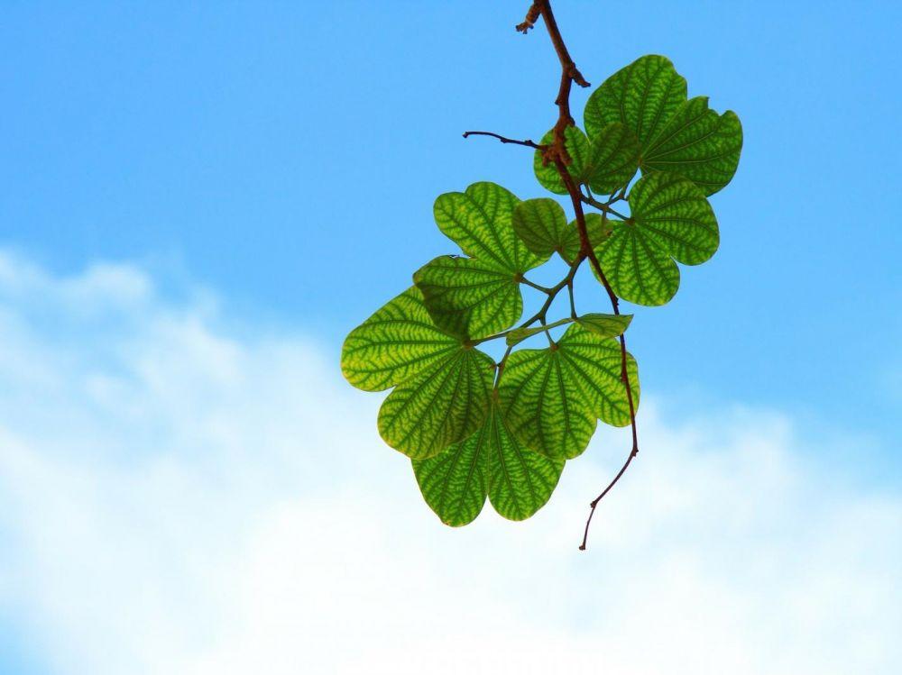 pourquoi les feuilles sont vertes ?