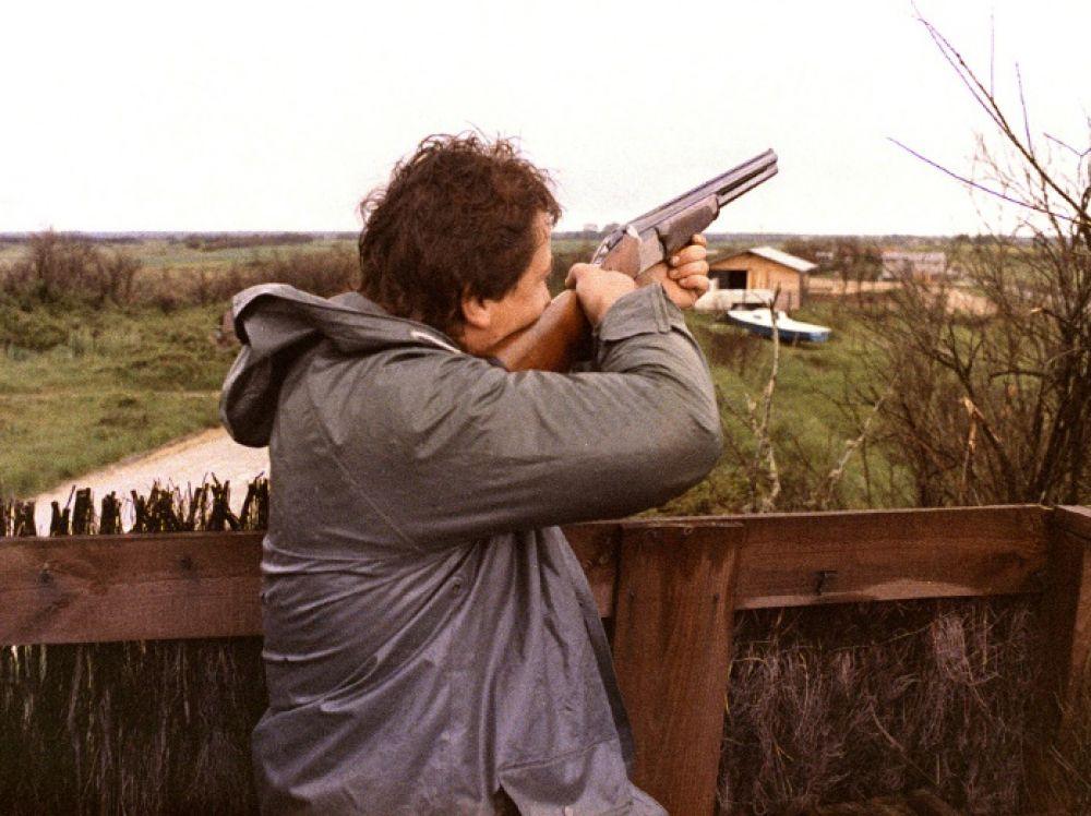 chasse de la tourterelle des bois