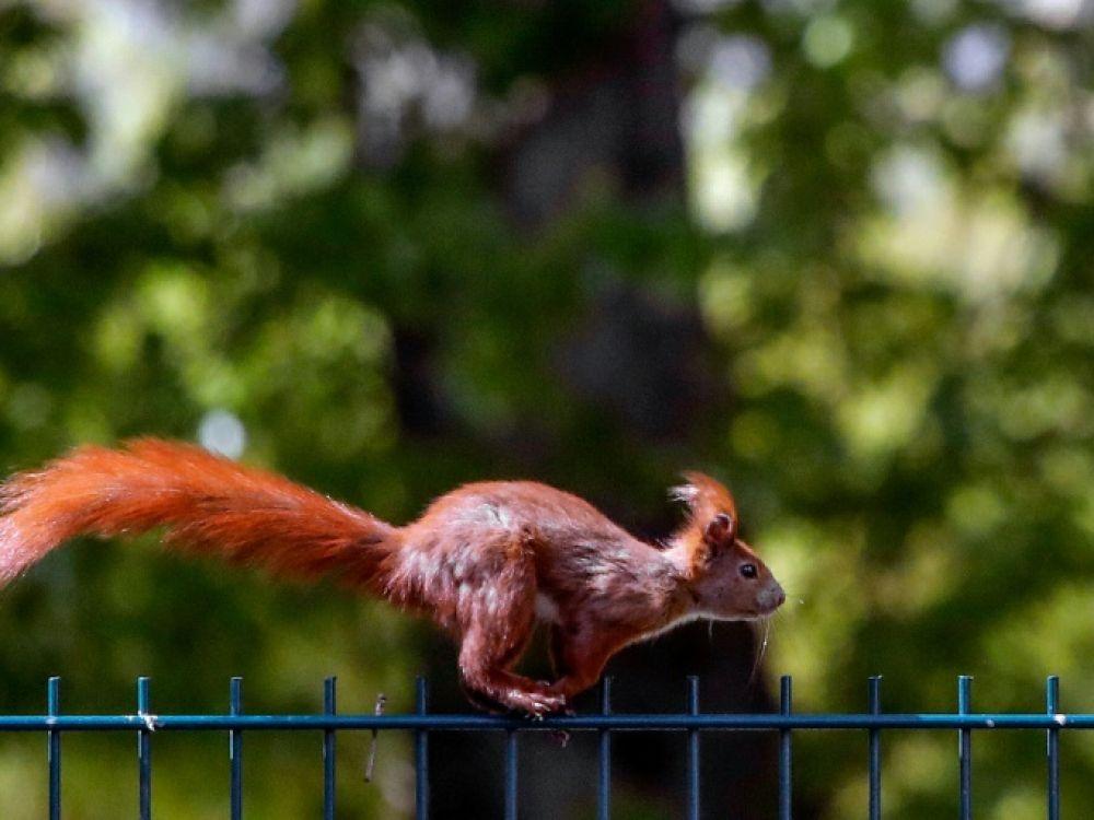 écureuils acrobates