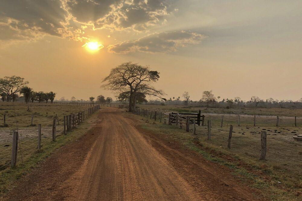 brésil:pantanal
