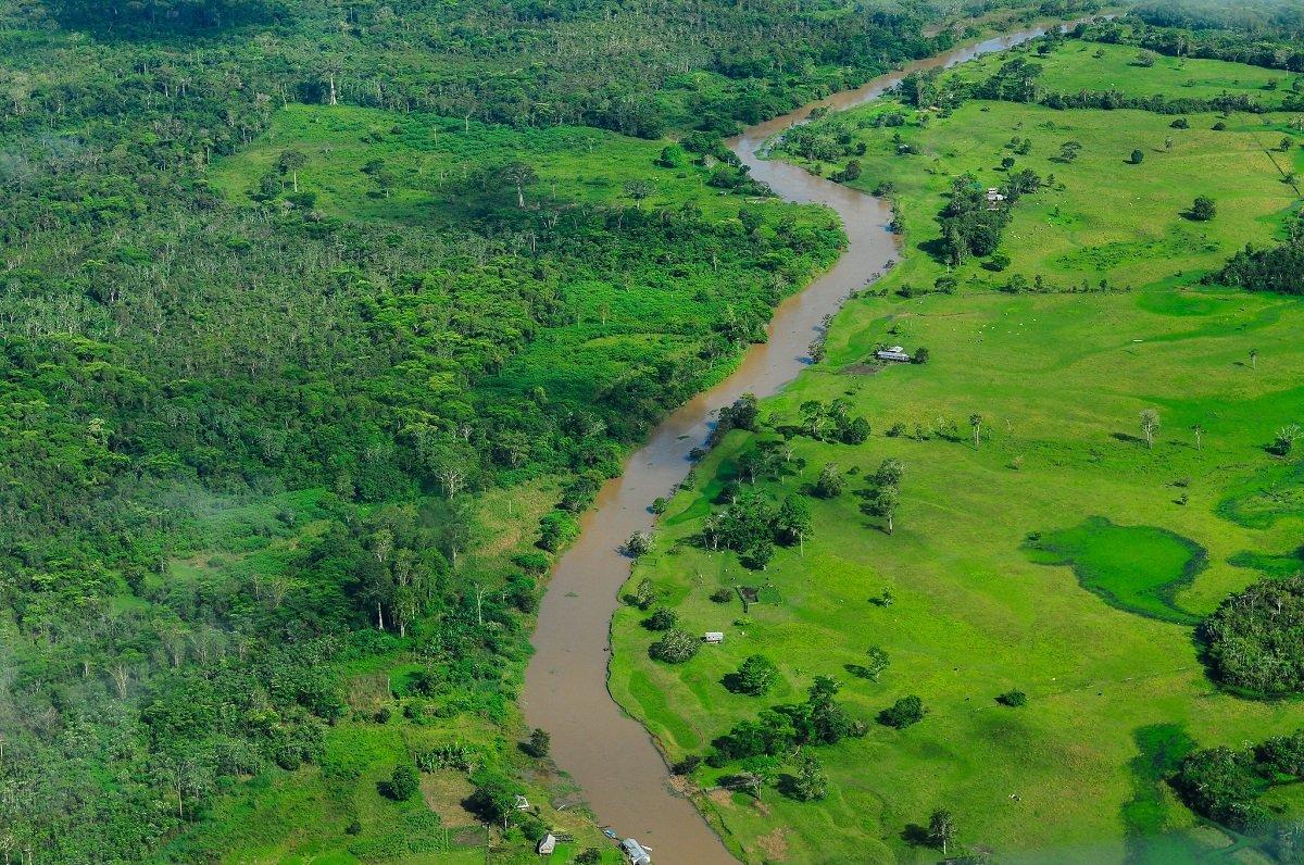 protéger 80% de la forêt amazonienne
